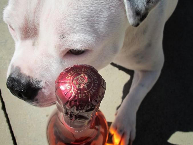 Ca' del Bosco Dog