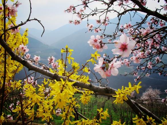 Spring in Alto Adige