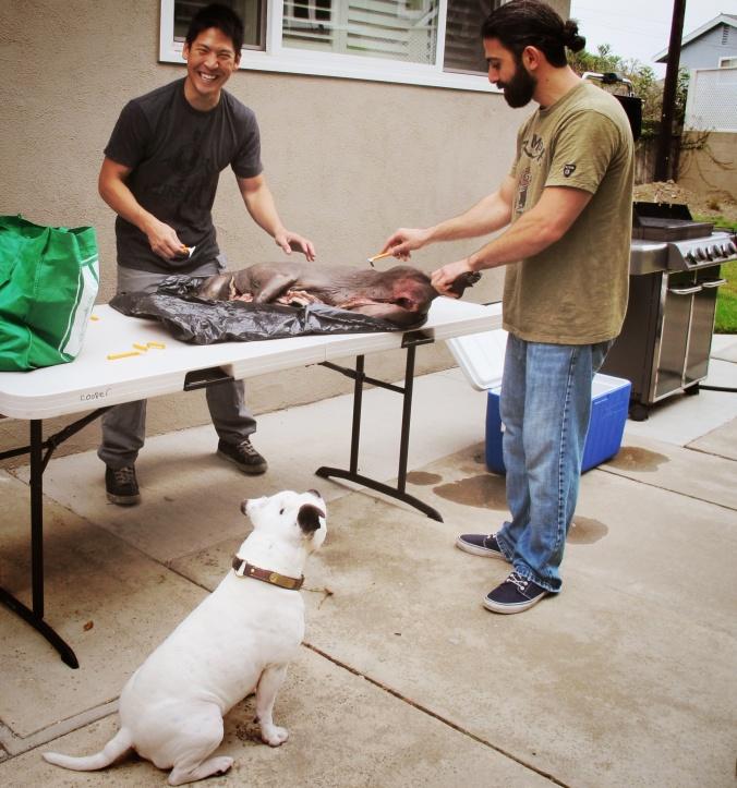 Shaving the Pig