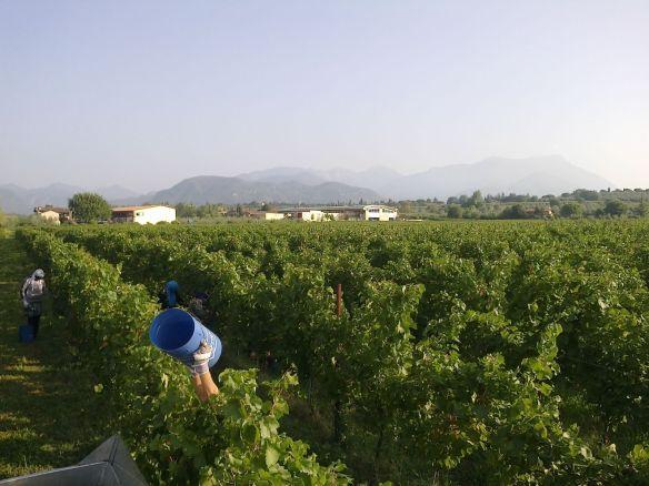 harvest landscape 2